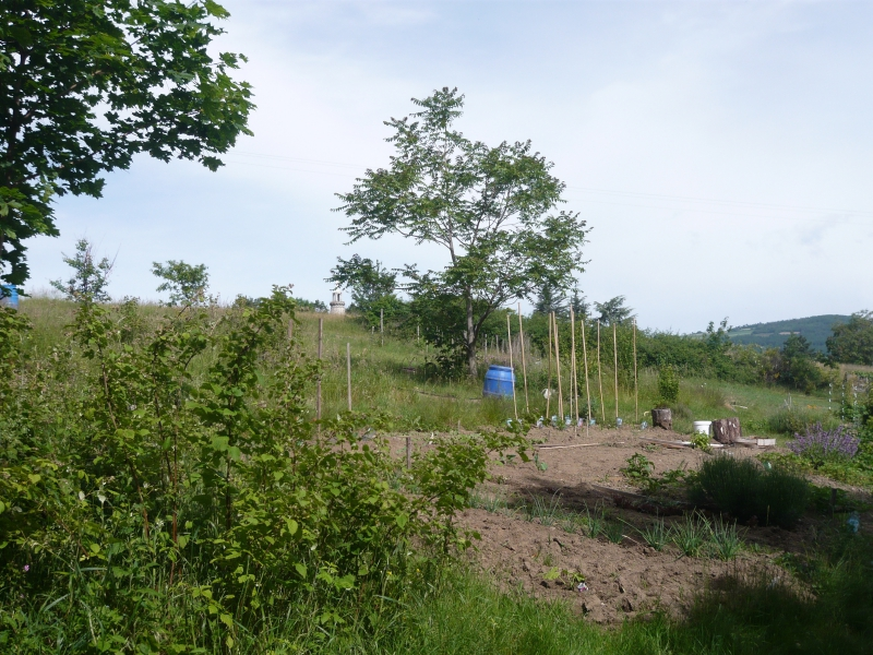 Jardin partagé_16