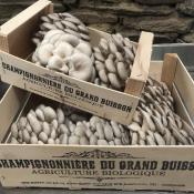 Champignonnière du Grand Buisson